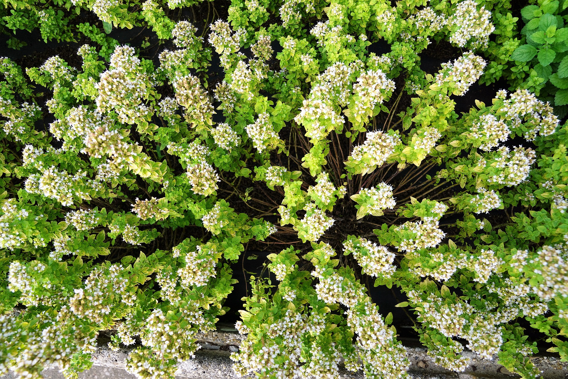 Make Time for Thyme